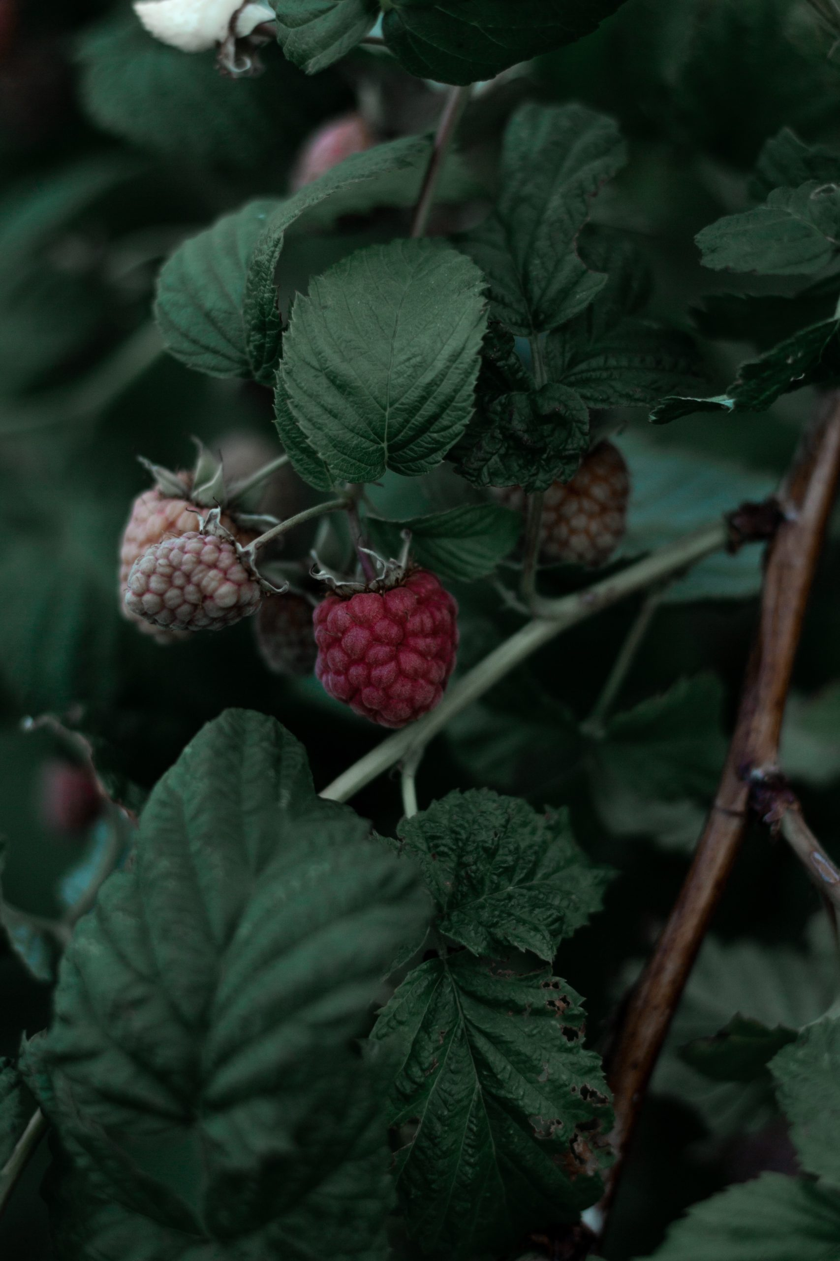 raspberry-unsplash
